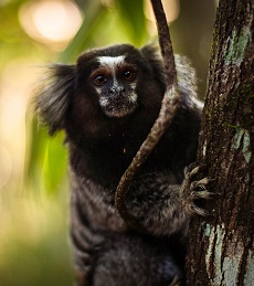 A marmoset Photo by Paulo Infante on Unsplash