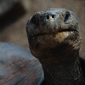 A tortoise face Photo by Miriam Miles on Unsplash
