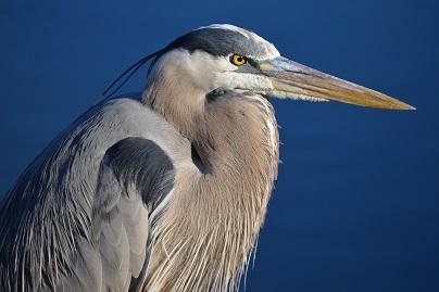 A stork Photo by Bob Walker on Unsplash