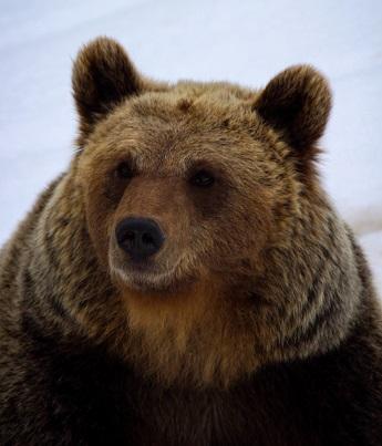 a bear Photo by Julien Juanola on Unsplash