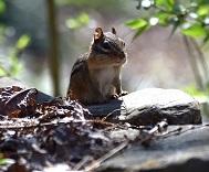a chipmunk Photo by Jan Haerer on Unsplash