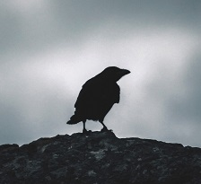 A crow Photo by Sergio Ibanez on Unsplash