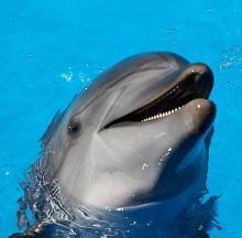 a dolphin Photo by Fabrizio Frigeni on Unsplash