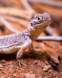a gecko Photo by Robert Koorenny on Unsplash