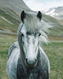 a pony Photo by Oscar Nilsson on Unsplash