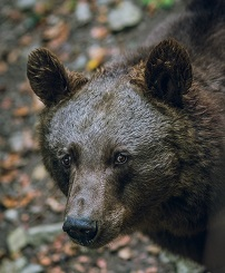 A Bear Photo by Matthias Goetzke on Unsplash