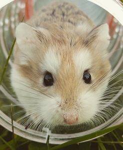 A gerbil Photo by My Name on Unsplash