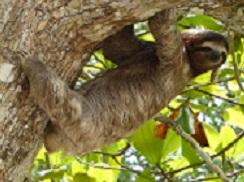 A Sloth Photo by Javier Mazzeo on Unsplash