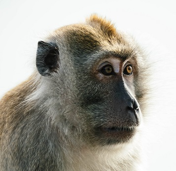A Baboon Photo by chuttersnap on Unsplash