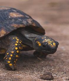A Box Turtle Photo by Romina veliz on Unsplash