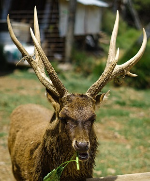 An Elk Photo by Fikri Rasyid on Unsplash