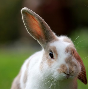 A Flemish Giant Rabbit Photo by Sandy Millar on Unsplash