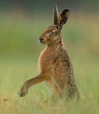 A Granada Hare Photo by Vincent van Zalinge on Unsplash