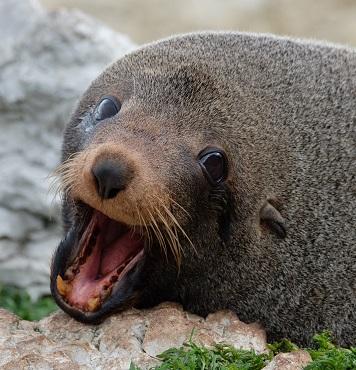 A Seal Photo by Karen Lau on Unsplash