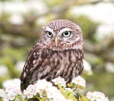 An Elf Owl Photo by Andy Chilton on Unsplash