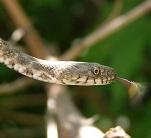 A Dice Snake Photo by Roberto Carlos Roman on Unsplash