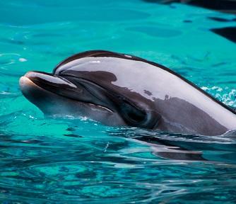 A Humpback Dolphin Photo by Yash Patel on Unsplash