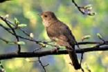 A Nightingale Photo by Boris Smokrovic on Unsplash