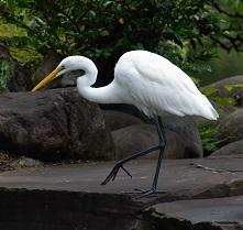 An Egret Photo by James Bowen on Unsplash