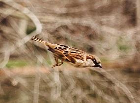A Sparrow Photo by Maria Teneva on Unsplash