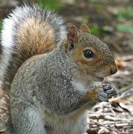 A Grey Squirrel Photo by Alex West on Unsplash